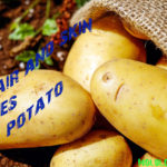 Do You Know These 14 Skin Uses of Potato?