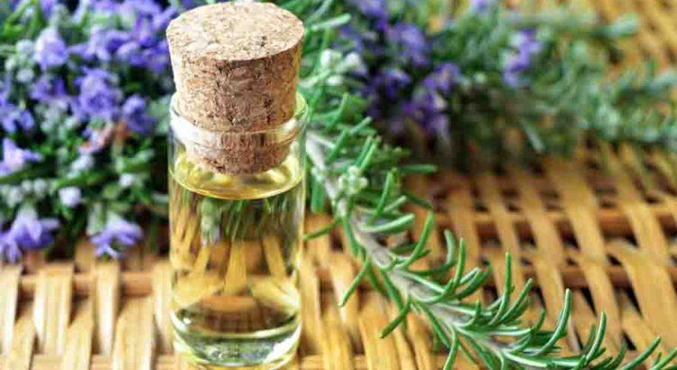 uses of rosemary oil | mololo cosmetics