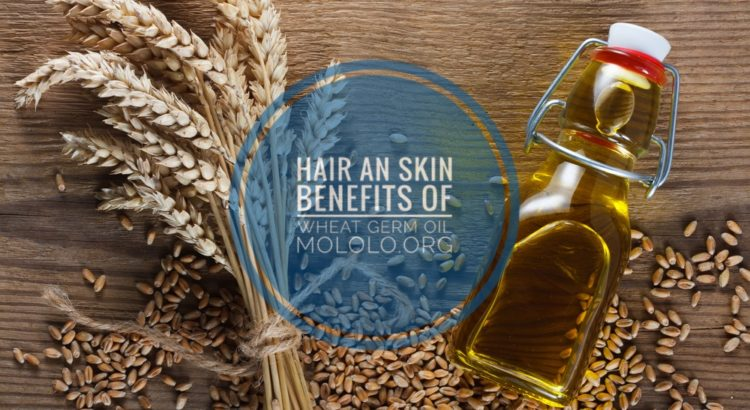 skin and hair benefits of wheat germ oil | Mololo cosmetics