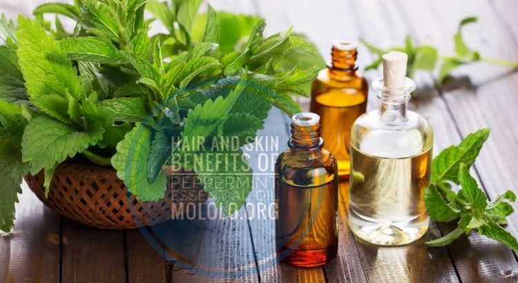 peppermint essential oil uses | mololo.org