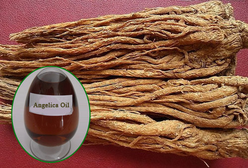 Angelica Root Essential Oil | mololo.org