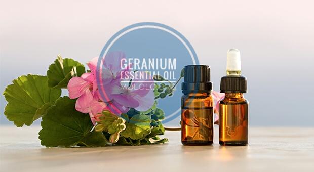 Geranium Essential Oil | mololo.org