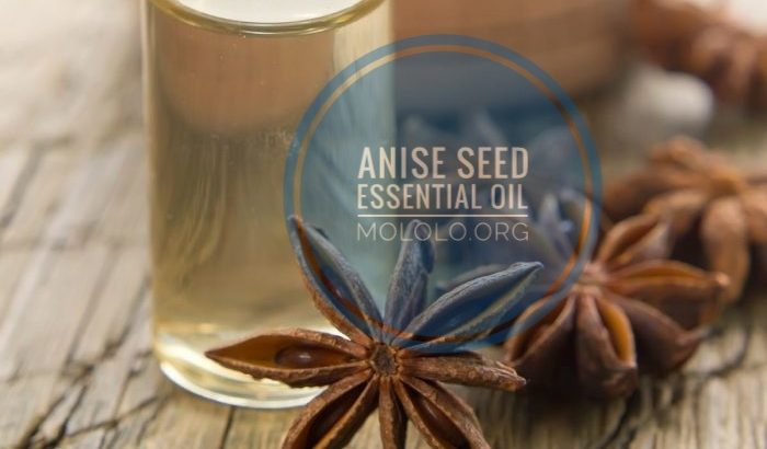Anise Seed Essential Oil | mololo.org