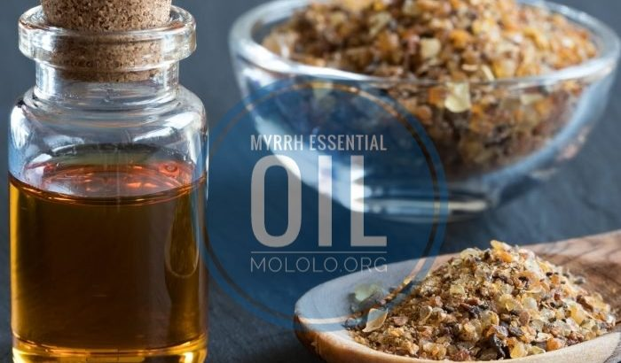 Myrrh Essential Oil | mololo.org