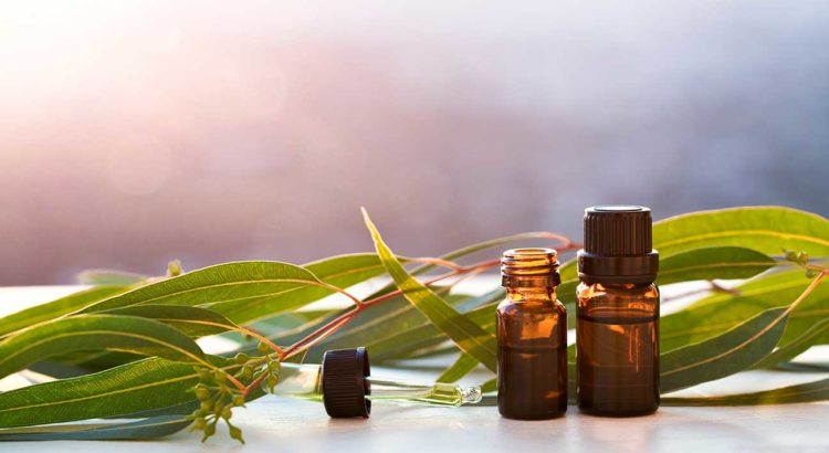 Eucalyptus Essential Oil - mololo blog