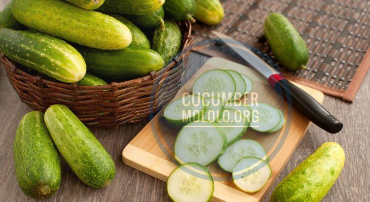 cucumber uses | mololo.org