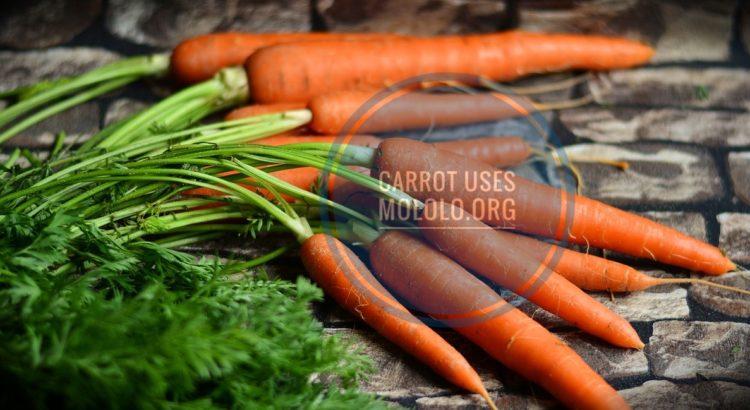 carrot | mololo.org