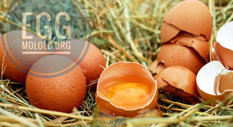 egg uses | mololo.org